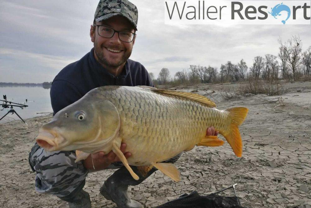 Waller Resort Polesella Auftakt-mit-14kg-e1553338785896 Karpfenangeln im Waller Resort