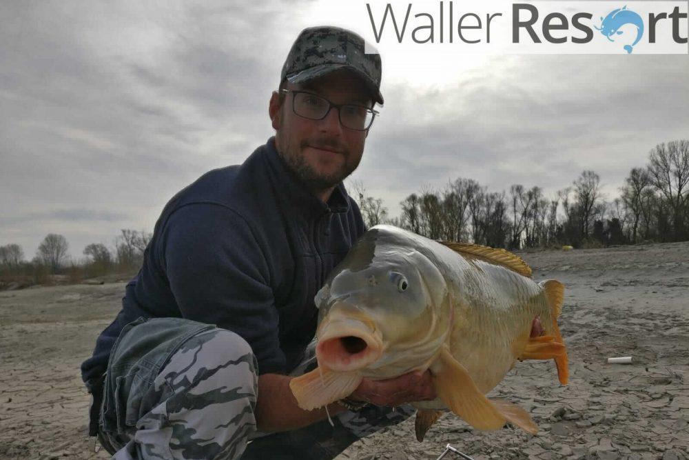 Waller Resort Polesella Großes-Maul-1-e1553338854791 Karpfenangeln im Waller Resort