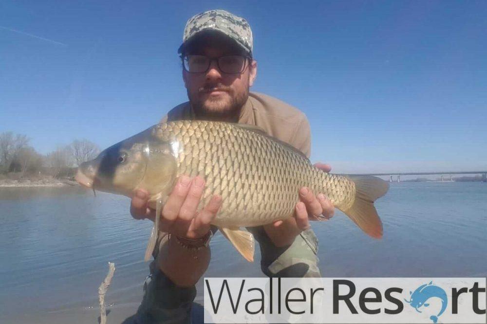 Waller Resort Polesella Schöner-Karpfen-e1553338910972 Karpfenangeln im Waller Resort
