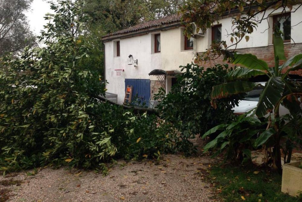 Waller Resort Polesella Sturmschaden-e1541347787157 Unwetter und Hochwasser im Waller Resort